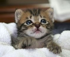 cute cats and kittens | animal, cat, cute, kitten - inspiring picture on Favim.com