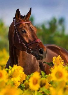 Image in Horses collection by Pearl Aranda on We Heart It Cute Horse Pictures, Horse Photos, Animal Pictures, Cute Funny Animals, Cute Baby Animals, Animals And Pets, Most Beautiful Horses, All The Pretty Horses, Cute Horses