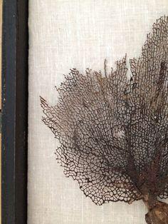 Framed All Natural Black Coral Sea Fan in vintage by BrilandFind