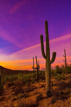 Sunset at Saguaro National Park, Arizona Pic by Wade Wilson Sunset Landscape, Landscape Art, Landscape Photography, Nature Photography, Desert Aesthetic, Nature Aesthetic, Desert Sunset, Sunset Pictures, Desert Pictures