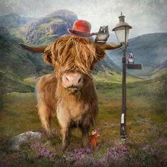 Highland Cow by Matylda Konecka   Edinburgh Arts