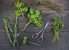 Erbe aromatiche: gli abbinamenti in cucina