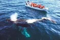 Things to Do in Puerto Vallarta: Whale watching (seasonal)
