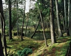 Jacqueline Hassink Saihō-ji Winter, Southwest Kyoto, 11 February 2011 Chromogenic x 50 x and 63 x Shared edition of 7 Contemporary Photographers, Landscape Photographers, Editorial Photography, Art Photography, Forest Garden, Buddhist Temple, Living In New York, Global Art, Winter
