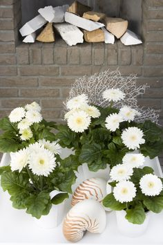 Sundayz® mini white gerbera outdoor
