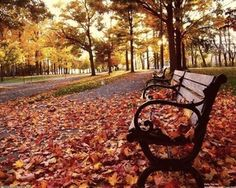 is there anything more beautiful than autumn? :3