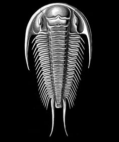 The Trilobite Show - Andrew Scott and Michel Gagné