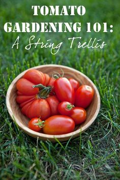 Tomato Gardening 101: A String Trellis via @Shaina Pagani Olmanson | Food for My Family - Click image to find more gardening Pinterest pins