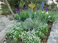 Parterre de flores en plena floración