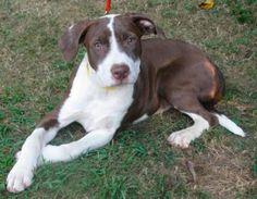 N.J. pets in need: Nov. 7, 2016