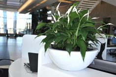 Plants add ambiance to any space, including interior office and retail space: