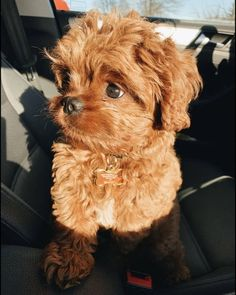 Super Cute Puppies, Cute Baby Dogs, Cute Little Puppies, Super Cute Animals, Cute Dogs And Puppies, Cute Little Animals, Cute Funny Animals, Cute Babies, Doggies