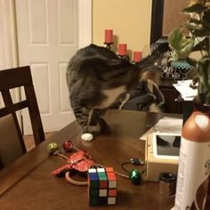 This cat who got too caught up in the chase:   Community Post: 16 Clumsy Cats Who Definitely Have Less Than Nine Lives Left