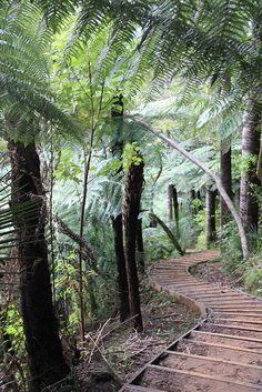 Waitakere ranges in greater Auckland by Belgian Economic Mission, via Flickr