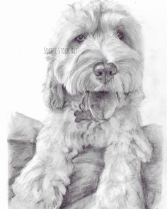What a floof!  This beauty is one of the pooches I sketched last summer I can't believe I haven't showed you all this yet!! He was so much fun to draw - I mean just look at his pose!