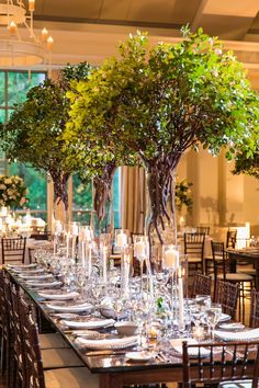 Towering tree centerpieces at stunning indoor southern wedding at Atlanta History Center in Georgia. Brought to life by Florist- Edge Design Group, Planner- TOAST Events and Photographer- Vue Photography. Tree Wedding Centerpieces, Garden Wedding Decorations, Wedding Table, Farm Table Decor, Indoor Wedding Receptions, Cricut Wedding, Floral Wedding, Wedding Flowers, Edge Design