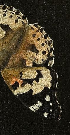 Detail from Three peaches on a stone ledge with a Painted Lady butterfly, Adriaen Coorte , 1693-1695