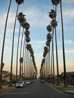 palm tree heaven ( California)