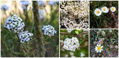 LaRoba: Girasoles... y otras flores