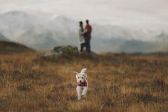 Con perro