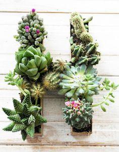 Succulent initial planter at twiggstudios.com