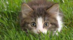 Vous en avez assez des chats qui viennent uriner dans votre jardin ? C'est vrai que ce n'est pas très agréable, surtout si vous avez un potager. Heureusement, il existe un répulsif naturel et ef...