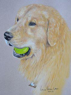 Golden Retriever with tennis ball pastel portrait by Victoria Peterson Laird.