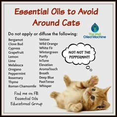 Essential Oils to Avoid Around Cats Find me on FB: Essential Oils Educational Group https://www.facebook.com/groups/1433913050217767/