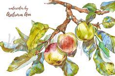 Watercolor apple by Asetrova Ann on @creativemarket