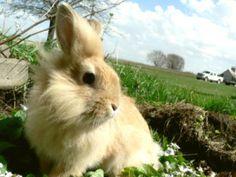 coniglio_progetto_animali