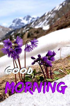 Good Morning Flowers Gif, Good Morning Good Night, Morning Wish, Good Day, Blessing Message, Happy Saturday, Mornings, Simple, Buen Dia