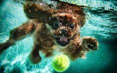 Dog Playing Fetch Underwater