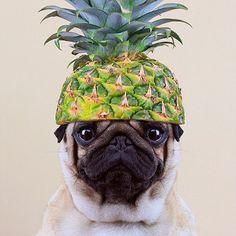 Pineapple Pug #pug