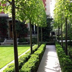 A hedge of pleached ornamental pear trees, trees hedged to meet the bush fire management plan requirements Garden Pool, Garden Trees, Garden Borders, Garden Paths, Modern Landscaping, Backyard Landscaping, Formal Gardens, Outdoor Gardens, Espalier