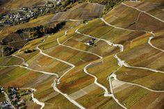 Autumn in the vineyards of Corin, Valais/Wallis, Switzerland | Vignoble automnal de Corin, Valais, Suisse