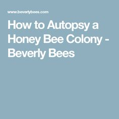 How to Autopsy a Honey Bee Colony - Beverly Bees