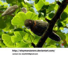 Parvavis chuxiongensis by EloyManzanero.deviantart.com on @DeviantArt
