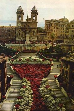 The Spanish Steps, Rome, Italy - Years ago, I had a conversation with a native European here. We were about the same age and just taking advantage of our cultural/geographical differences. These lovely flowers were gone when I visited in '14.