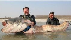 Monster fish - Italy - I so won't be swimming here! Ever!!