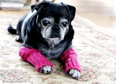 Snuggly Dog Leg Warmers by AllYouNeedIsPugShop on Etsy, $18.00  #pugs #pug #pets #dogs