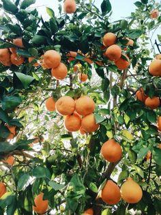 citrus & summertime