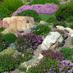 If you live in a dry and arid climate then your desert landscaping is going to take a little more planning than some other parts of the country. desert landscaping will have to work with a plan that includes only plants and trees that Hillside Landscaping, Country Landscaping, Landscaping With Rocks, Front Yard Landscaping, Backyard Landscaping, Landscaping Ideas, Landscaping Software, Backyard Ideas, Colorado Landscaping