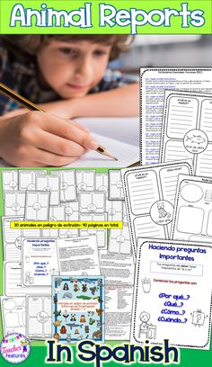 **ALL IN SPANISH** No Prep- Common Core. Everything you need to get your students started on a beginning guided research writing project. Research Animals and Animal Habitats using the graphic organizer templates to teach your class how to navigate and organize information.