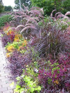 Purple Fountain Grass | Posted by Mark Dwyer, Director of Horticulture, Rotary Botanical ... Purple Garden, Colorful Garden, Shade Garden, Autumn Flowering Plants, Fall Plants, Outdoor Landscaping, Outdoor Plants, Landscaping With Grasses, Front Yard Planters