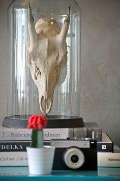 Nem flor, nem comida. O enfeite original da Desmobilia tem um crânio animal sob o vidro