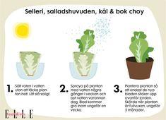 Vegetable Gardening Tips And Tricks Rooftop Garden, Balcony Garden, Bra Hacks, Plants Are Friends, Gardening Tips, Kitchen Gardening, Vegetable Gardening, Rum, Flora