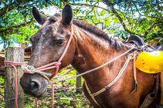 Happy horse face at Rancho Tropical Matapalo, Osa Peninsula, Costa Rica #sports #fun #waterfall #horseback #farm