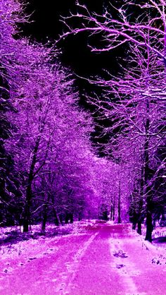 Land of Fantasy. Purple Wallpaper, Nature Wallpaper, Wallpaper Backgrounds, Purple Love, All Things Purple, Pink, Beautiful Places, Beautiful Pictures, Colorful Trees