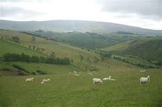 The countryside outside of Carrickfergus, Ireland.