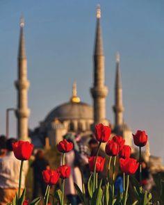 ✧ - Istanbul Best of Istanbul, Turkey Islamic Wallpaper Hd, Mecca Wallpaper, Islamic Posters, Islamic Art, Blue Mosque Istanbul, Istanbul City, La Ilaha Illallah, Mosque Architecture, Mekka